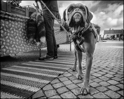 Hund på torget